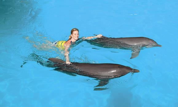 Swim With Dolphins Explorer