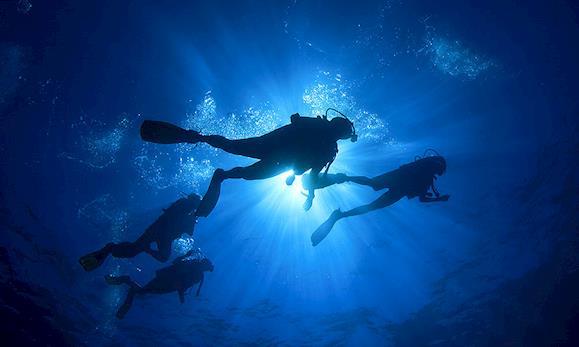 Diving vacations   Transat