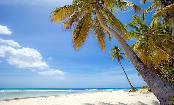 r 233 publique dominicaine voyage derni 232 re minute et tourisme transat